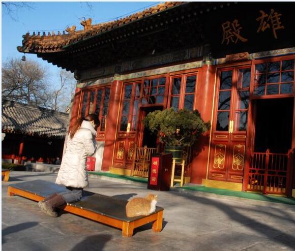 喵星人在北京广济寺大雄宝殿前拜佛.jpg